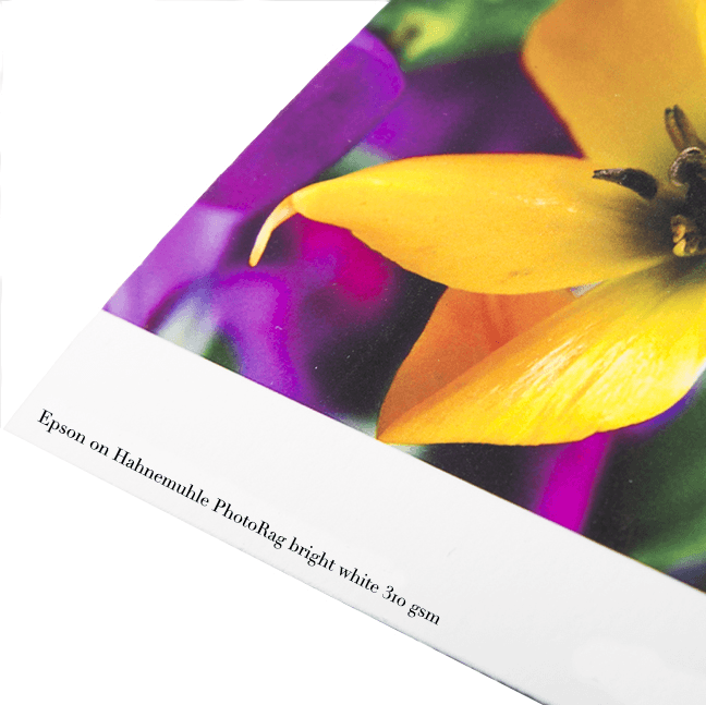 Carta_PhotoRagBrightWhite310gsm